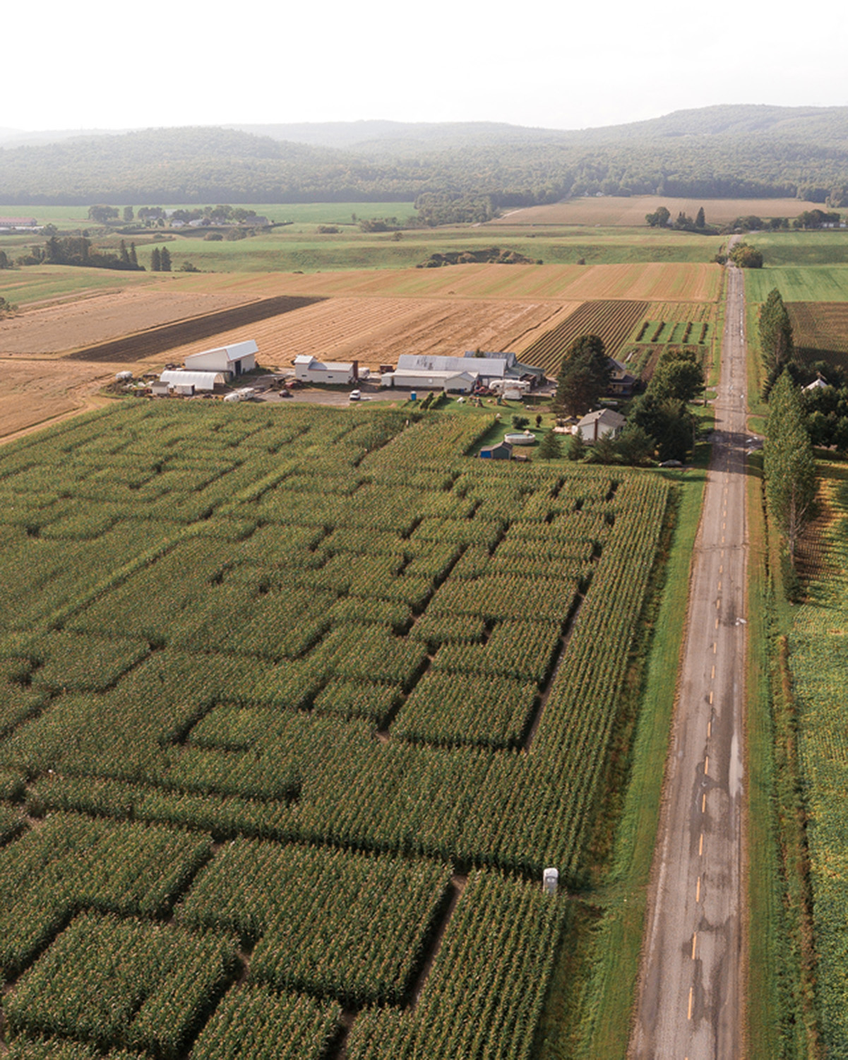 The great corn labyrinth of Ferme Guy Rivest