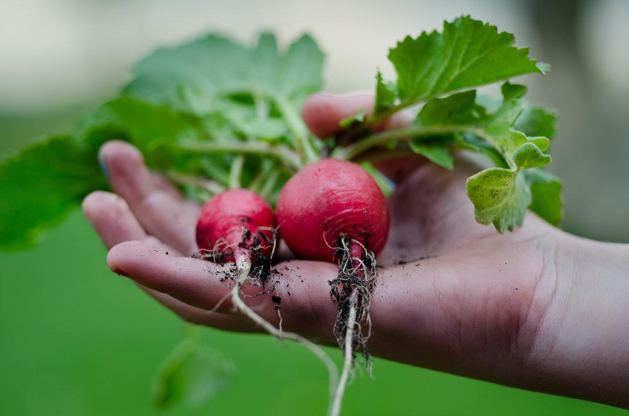 autocueillette légumes lanaudière